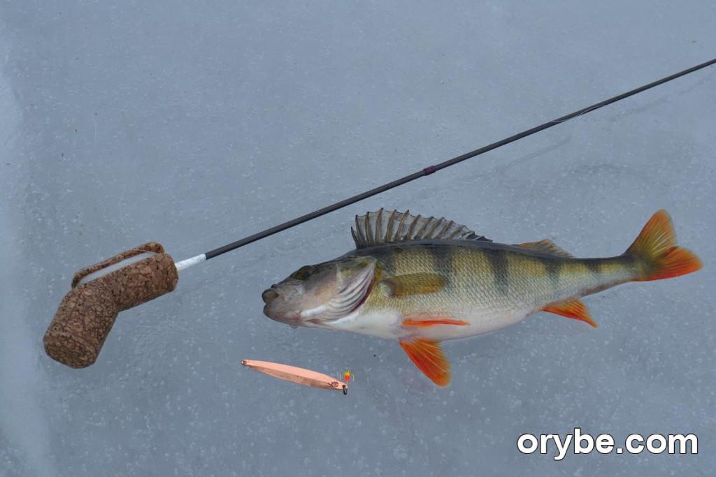 клёв рыбы в ленинградской области луга