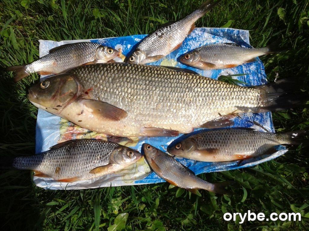 прогноз клева рыбы рязанская