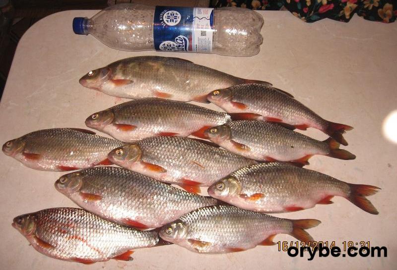 клев рыбы на сегодня белгород