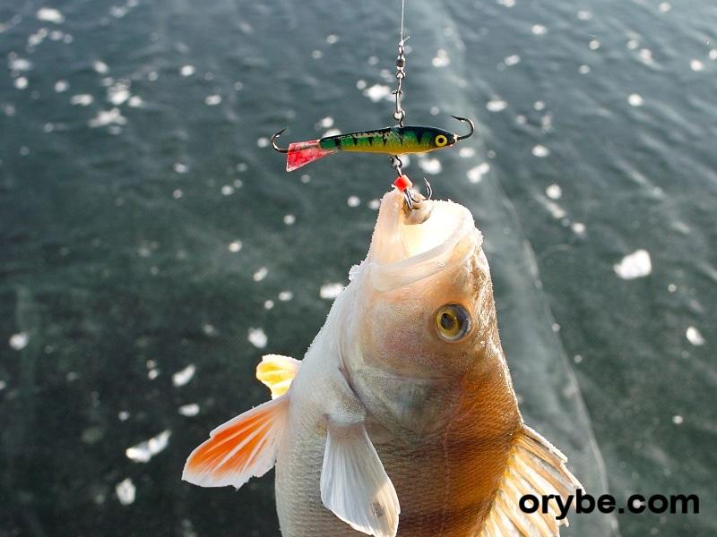 платная рыбалка на рузе или нет