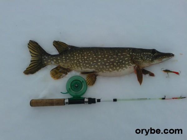 Рыболовный форум нижнего новгорода клев рыбы