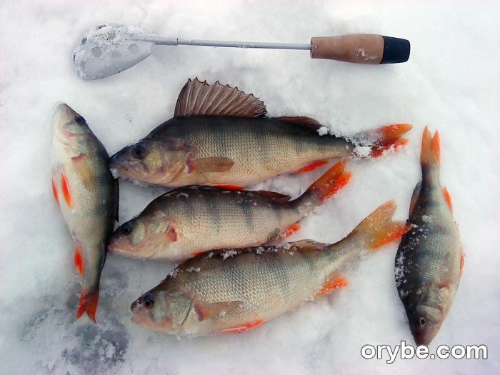 рыбозавод камень рыболов