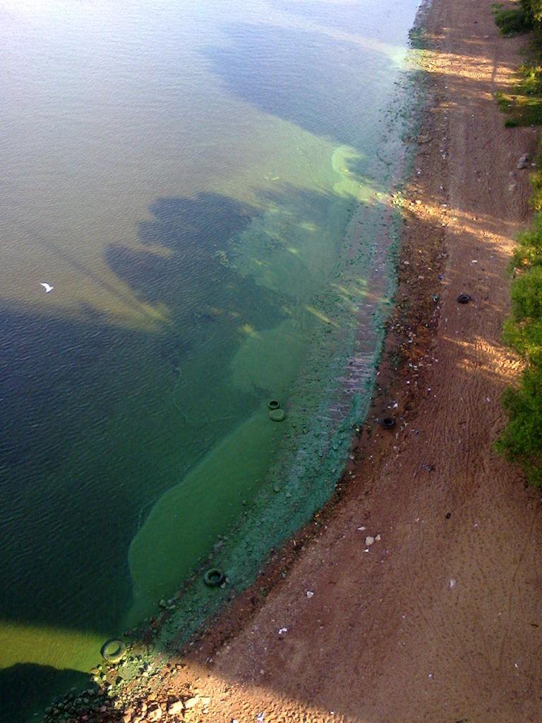 прогноз клева рыбы новопавловск ставропольский край