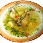 uha-iz-svegey-ryby