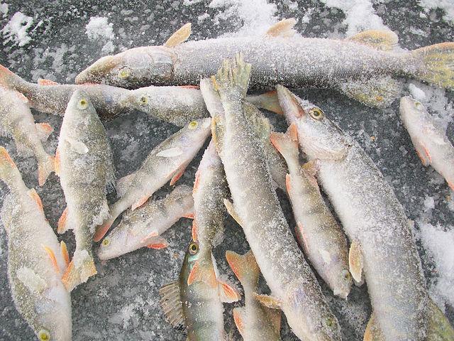 рыболовная база карпов