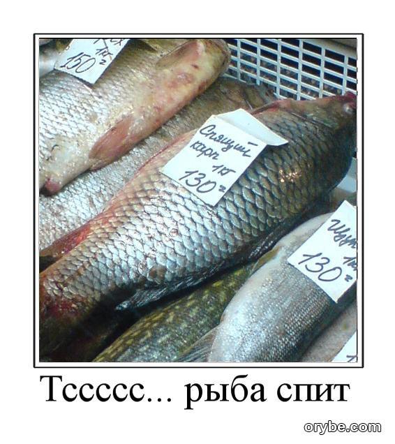 анекдоты насчет рыбу да рыбалку